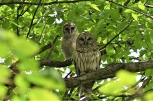 owl-mom-baby